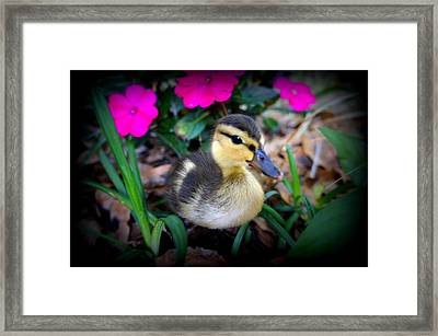 Framed Print featuring the photograph Reynolds by Laurie Perry