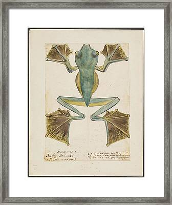 Rhacophorus Tree Frog Framed Print by Natural History Museum, London