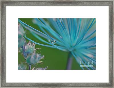 Rhapsody In Blue Framed Print by Michelle Meenawong