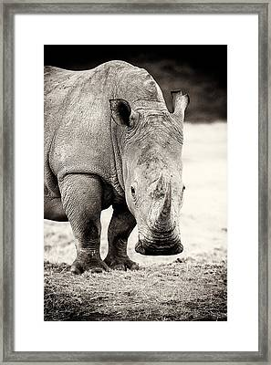 Rhino After The Rain Framed Print by Mike Gaudaur