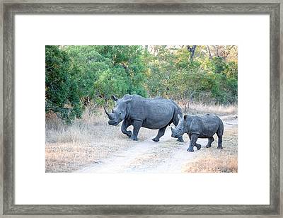 Rhino And Mom Framed Print by Craig Brown
