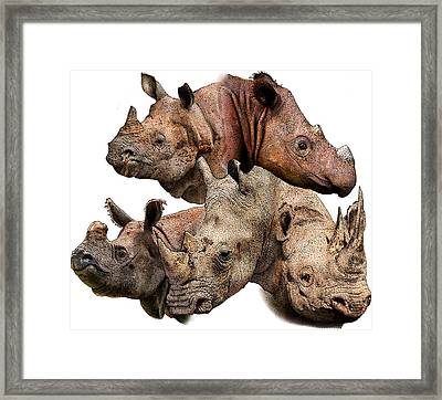 Rhino Collage Framed Print by Roger Hall