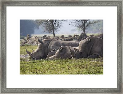 Rhino Family Framed Print by Austin Whisnant
