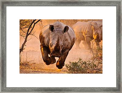 Rhino Learning To Fly Framed Print by Justus Vermaak