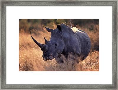 Rhino Framed Print by Michael Edwards