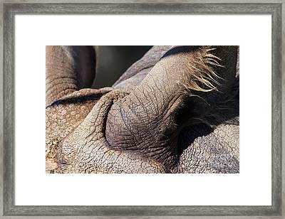Rhinoceros 7d9121 Framed Print