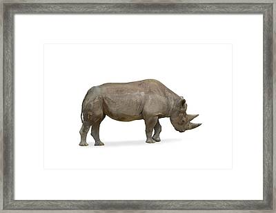 Framed Print featuring the photograph Rhinoceros by Charles Beeler