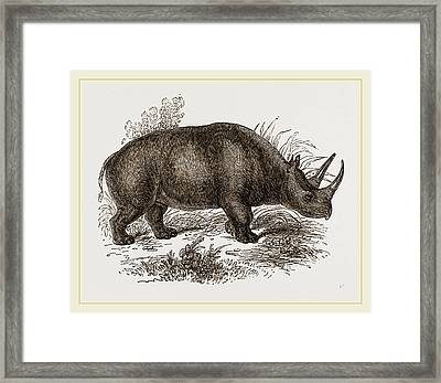 Rhinoceros Keitloa Framed Print by Litz Collection