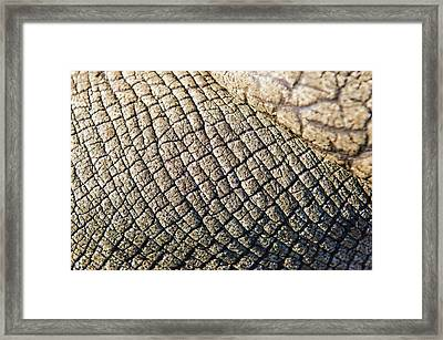 Rhinoceros Skin Framed Print by Peter Chadwick
