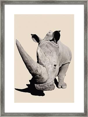 Rhinocerosafrica Framed Print by Thomas Kitchin & Victoria Hurst