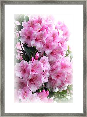 Rhodie Blossom Cascade Framed Print