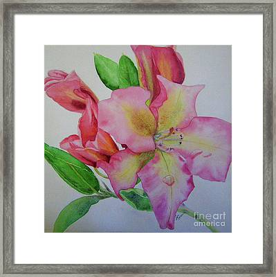 Rhodie With Dew I Framed Print