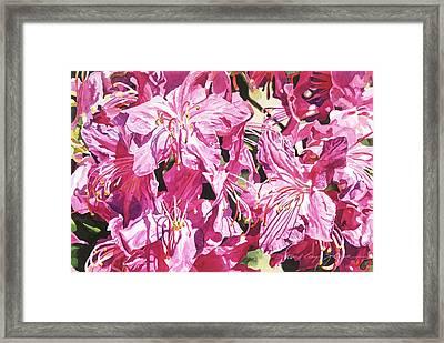 Rhodo Blossoms Framed Print by David Lloyd Glover