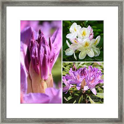 Rhododendron Collage Framed Print