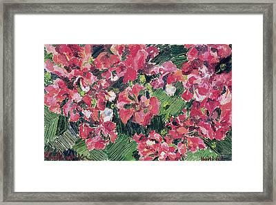 Rhododendron Framed Print by Izabella Godlewska de Aranda