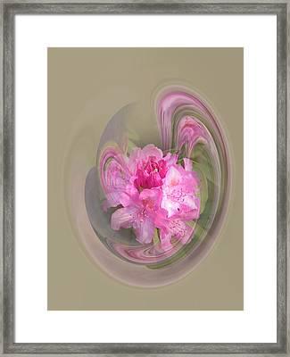 Rhododendron Awakening Framed Print