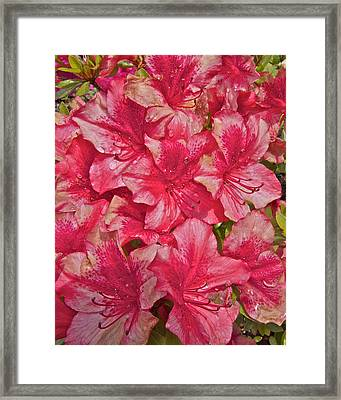 Framed Print featuring the photograph Rhododendron Closeup by Todd Kreuter