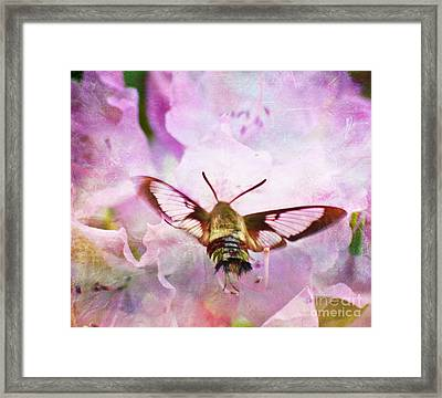 Rhododendron Dreams Framed Print