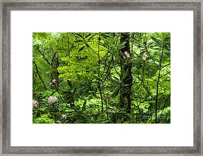 Rhododendron Forest Framed Print by Thomas R Fletcher