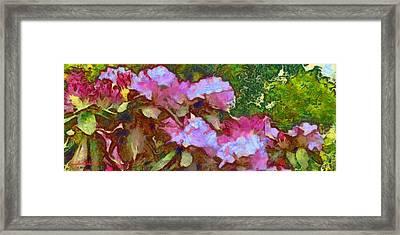 Rhododendron Splash Framed Print by Spyder Webb