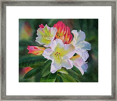 Rhododendron With Red Buds Framed Print by Sharon Freeman