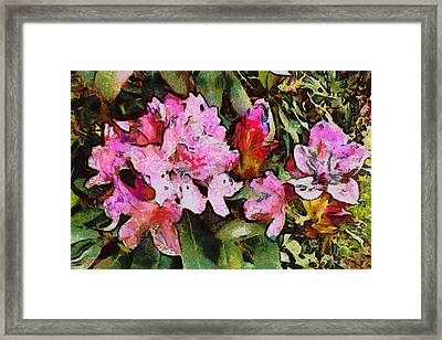 Rhododendrons One Framed Print by Spyder Webb