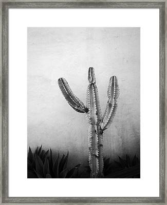 Ribbing Framed Print by David Pantuso