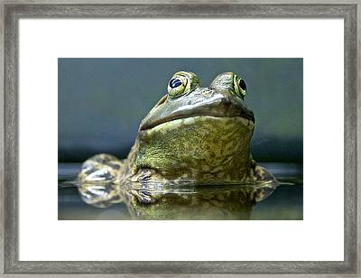 Framed Print featuring the photograph Ribbit  by Scott Holmes