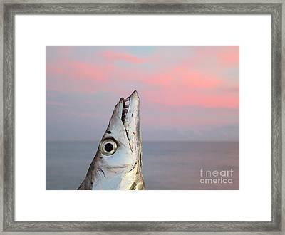 Ribbonfish At Sunrise Framed Print by Patricia Januszkiewicz
