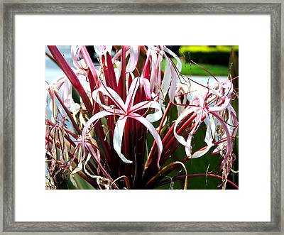 Ribbon's And Lace Framed Print