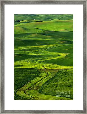 Ribbons Of Green Framed Print by Mike Dawson