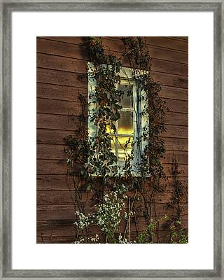 Ribbons Of Vines And Inspiring Sunset Reflections Framed Print by Thomas Schoeller