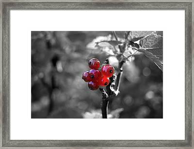 Ribes Framed Print by Adam  S