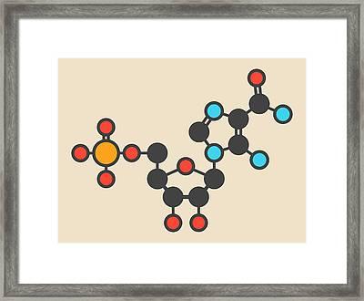 Ribonucleotide Molecule Framed Print by Molekuul