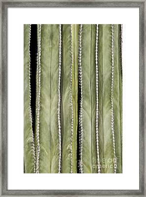 Ribs Framed Print by Kathy McClure