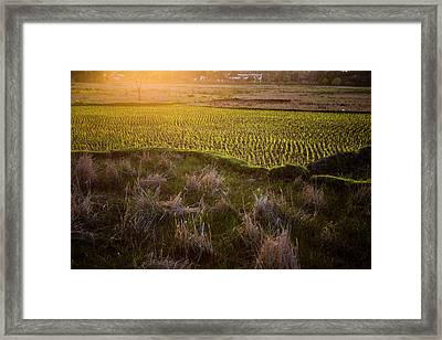 Rice Field In Madagascar Framed Print by Diana Mrazikova/ Vwpics