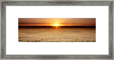 Rice Field, Sacramento Valley Framed Print