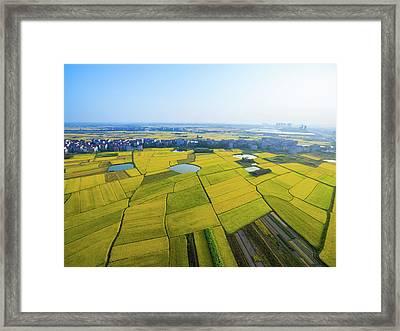 Rice Field Framed Print by Yangna