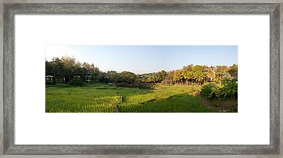 Rice Fields In Front Of Villas, Four Framed Print
