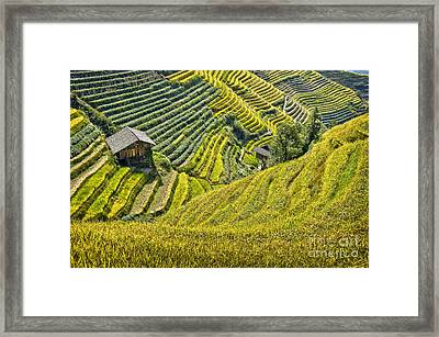 Rice Fields Terraces Framed Print