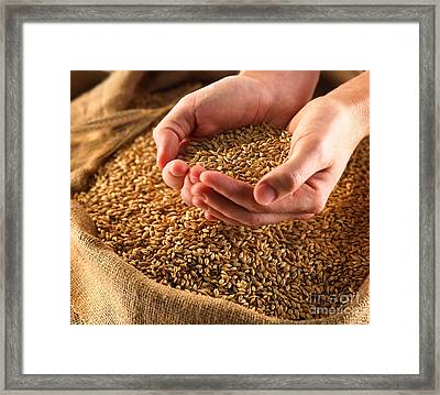 Rice In Hand Framed Print by Boon Mee