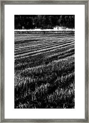 Rice Paddies Framed Print by Edgar Laureano