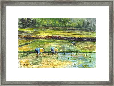 The Rice Paddy Field Framed Print by Carol Wisniewski