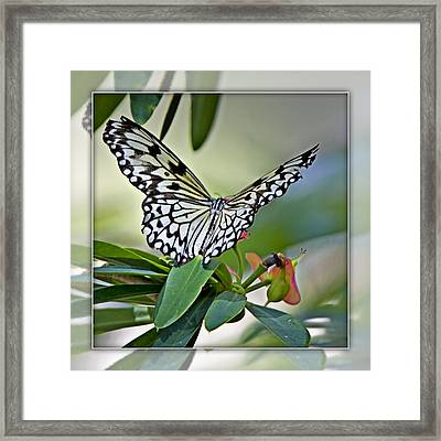 Rice Paper Butterfly 2b Framed Print