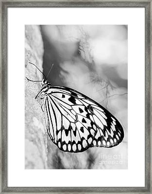 Rice Paper Butterfly Hanging On Framed Print by Sabrina L Ryan