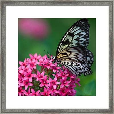 Rice Paper Butterfly Framed Print by Joann Vitali