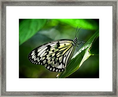 Framed Print featuring the photograph Rice Paper Butterfly by Zoe Ferrie