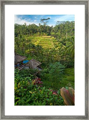 Framed Print featuring the photograph Rice Terraces - Bali by Matthew Onheiber