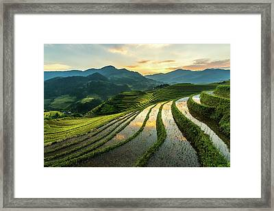 Rice Terraces At Mu Cang Chai, Vietnam Framed Print by Chan Srithaweeporn