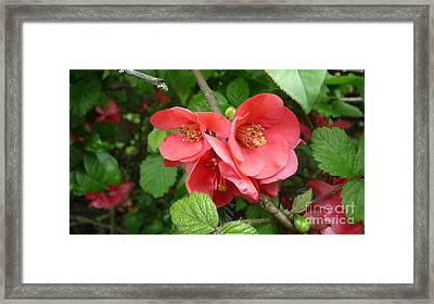 Rich And Powerful  Framed Print by Julie Koretz